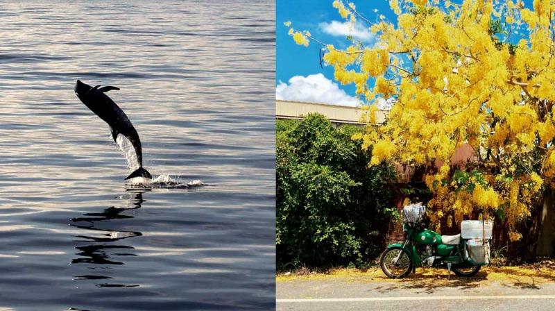左圖攝影為江文龍;右圖攝影為李翔