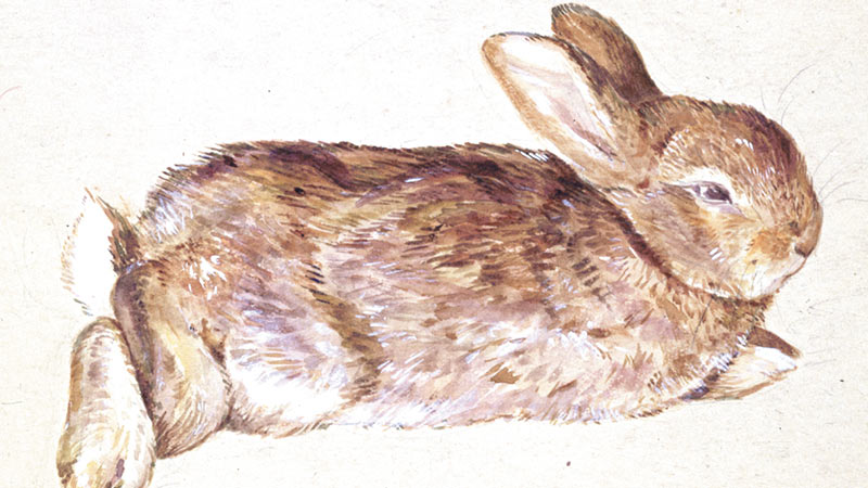 about_real_peter_rabbit_800x450.jpg
