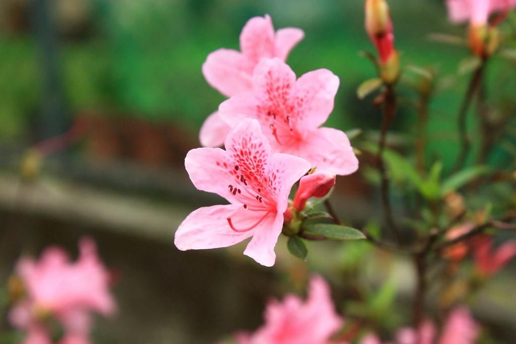 ye_wai_mie_jue_de_wu_lai_du_juan_reng_ke_yu_yi_xie_ju_min_jia_zhai_nei_kan_de_jian_._she_ying_fan_su_wei_.jpg